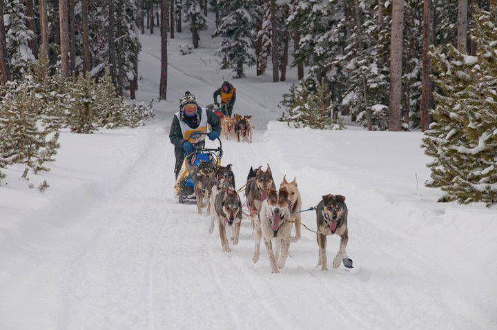 husky dog slege experience Scotland UK
